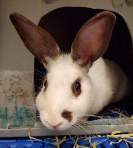 "Picture of a rabbit on the Bunny Buddies ""contact us"" page"