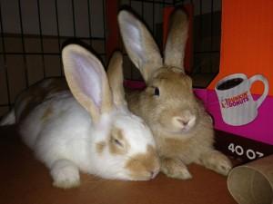 Benny & Blossom (Tiny & Brownie)